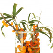 Branches of sea buckthorn in glass vase isolated on white — Stock Photo #38790665