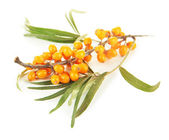 Branch of sea buckthorn isolated on white — Stock Photo