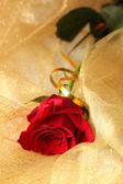 Beautiful rose on color fabric background — Stock Photo