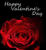 Rosa hermosa y color de la tela, aislado sobre fondo negro — Foto de Stock