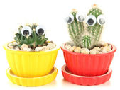 Cactuses in flowerpots with funny eyes, isolated on white — Stock Photo