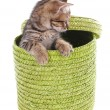 Little kitten in wicker basket isolated on white — Stock Photo #38824237