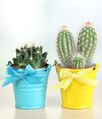 Bellissimo cactus in secchielli luminosi sul tavolo — Foto Stock