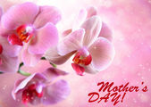Beautiful blooming orchid on light color background — Stock Photo