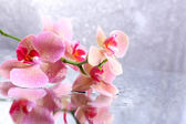 Beautiful blooming orchid with water drops on light color background — Foto Stock