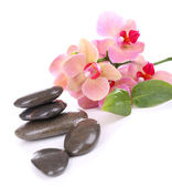 Composition with beautiful blooming orchid with water drops and spa stones, isolated on white — Stock Photo