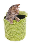 Gatito en cesta de mimbre aislada en blanco — Foto de Stock