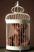 Toy bear in decorative cage on wooden table, on brown background — Stock Photo