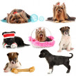 Collage of cute puppies isolated on white — Stock Photo #39028009