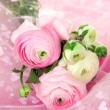 Stock Photo: Ranunculus (persibuttercups), on pink cloth