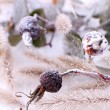 Frozen plants on snow close up — Stock Photo