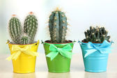 Collection of cactuses in bright pails on wooden table — Stock Photo