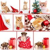 Collage of kitten and puppy with Christmas decorations — Stockfoto