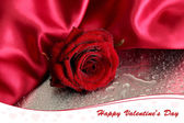 Beautiful red rose and silk fabric on wet grey background — Stock Photo