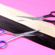 Stock Photo: Long black and blond hair with scissors on pink background