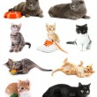 Collage of kittens isolated on white — Stock Photo #39432151