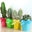 Collection of cactuses in bright pails on wooden table — Stock Photo #39500941