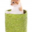 Little kitten in wicker basket isolated on white — Stock Photo #39503167