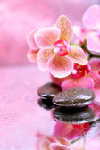 Composition with beautiful blooming orchid with water drops and spa stones, on light color background — Stok fotoğraf