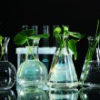 Plants in test tubes, isolated on black — Stock Photo