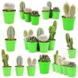 Collage of cacti, isolated on white — Stock Photo #39908105