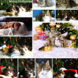 Collage of animals with Christmas decorations — Stock Photo