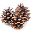 Stock Photo: Beautiful pine cones isolated on white