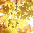 Autumnal background — Stock Photo