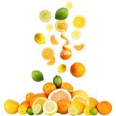 Citrus isolated on white — Stock Photo