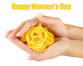 Yellow rose with hands on white background — Stock Photo