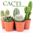 Collection of cactuses, isolated on white — Stock Photo #40277841