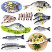 Verse vis en visgerechten geïsoleerd op wit — Stockfoto