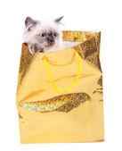 Hermoso gato en paquete aislado en blanco — Foto de Stock
