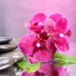 Stock Photo: Composition with beautiful blooming orchid with water drops and spstones, on light color background
