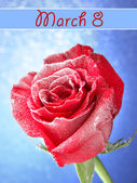 Rosa roja en la nieve sobre fondo azul — Foto de Stock