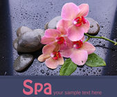 Composition with beautiful blooming orchid with water drops and spa stones, on gray background — Stock Photo