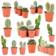 Stock Photo: Collage of cacti, isolated on white