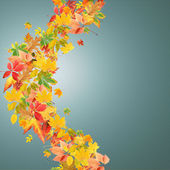 Collage of tree leaves. Autumn — Stock Photo