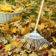 Cleaning of autumn leaves on green lawn — Stock Photo #40581115
