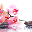 Composition with beautiful blooming orchid with water drops and spa stones, isolated on white — Stock Photo #40591193