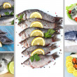 Stock Photo: Fresh fish and fish dishes collage