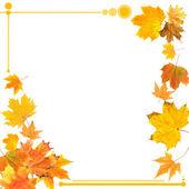 Prachtige gekleurde herfstbladeren geïsoleerd op wit — Stockfoto