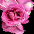 Pink rose isolated on black — Stock Photo