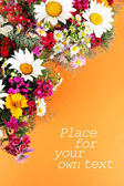 Beautiful bright flowers on orange background — Stock Photo