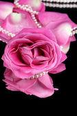 Rosa rose auf schwarz isoliert — Stockfoto