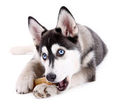 Beautiful cute husky puppy, isolated on white — Stock Photo