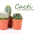 Collection of cactuses, isolated on white — Stock Photo #40891091