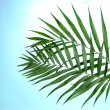 Stock Photo: Beautiful palm leaves on blue background