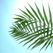 Beautiful palm leaves on blue background — Stock Photo #40894981