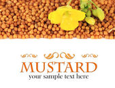 Mustard seeds with mustard flower isolated on white — Stock Photo